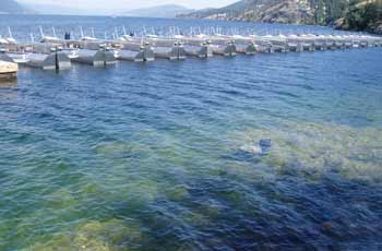 Environmental Impact Assessment On Boat Docks