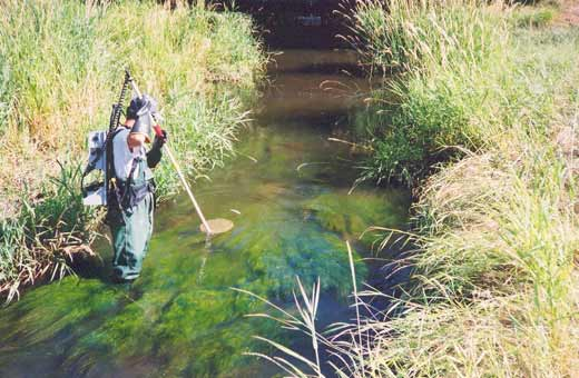 Environmental Inventory Man Checking Water Stream