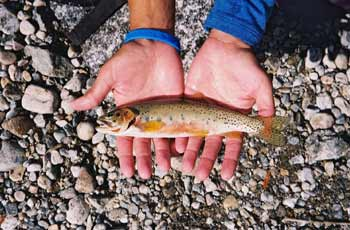 Inventory Of Water Life - Hands Holding Fish